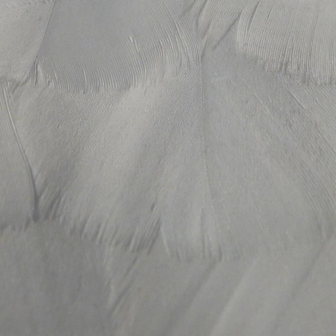 White Surface - Photo 5